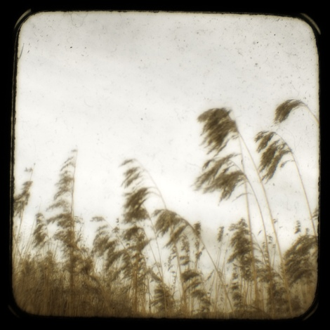 IL vento non urla